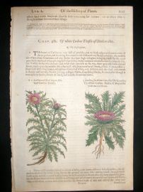 Gerards Herbal 1633 Hand Col Botanical Print. Carline Thistle